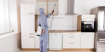 5 Signs You Should Call a Pest Control Company, Versailles, Kentucky