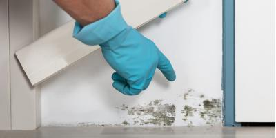 A Brief Guide to Mold Remediation, Rochester, Minnesota