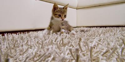 Use These 5 Carpet Cleaning Tips for Pets, Wailuku, Hawaii