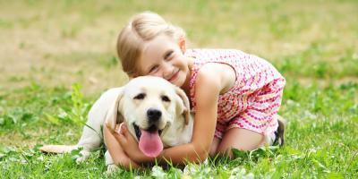Mosquito Control Experts Offer 4 Pet Protection Tips , Bullard, Texas