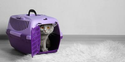 3 Useful Tips to Prepare Your Cat for Boarding, Newport-Fort Thomas, Kentucky