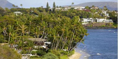 Honolulu Tree Service Company Shares 3 Common Hawaiian Tree Diseases, Honolulu, Hawaii