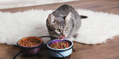 5 Reasons Your Cat May Not Be Eating , Baraboo, Wisconsin