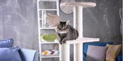 Why Do Cats Like Heights So Much?, Covington, Kentucky