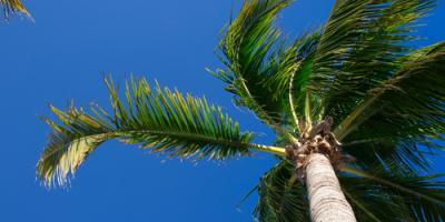 Why Trees Are Worth Saving, Makawao-Paia, Hawaii