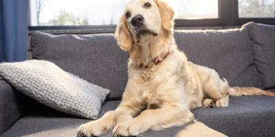 Why It's Crucial to Trim Your Dog's Nails, Manhattan, New York
