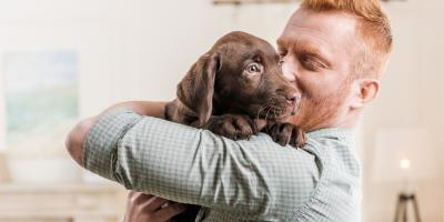 4 Important Pet Supplies to Welcome Your Puppy Home, Manhattan, New York