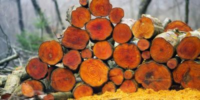 Camden Foresters Explain How to Buy & Sell Timberland, Camden, Arkansas