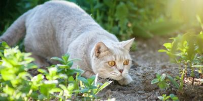 Why a Cat Isn't an Effective Pest Control Method , Las Vegas, Nevada
