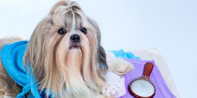 How Old Should Your Pet Be for Their First Dog Grooming Session?, Keaau, Hawaii