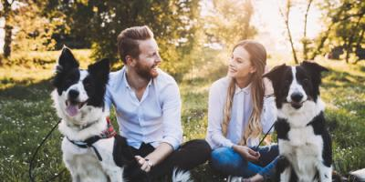 How to Prepare for Your First Trip to the Dog Park, Babylon, New York