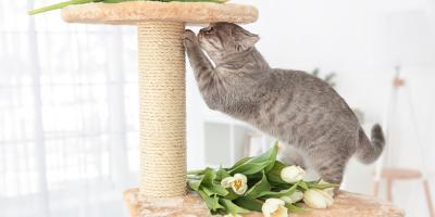Top Pet Care Tips for Cat Claws, Columbus, Nebraska