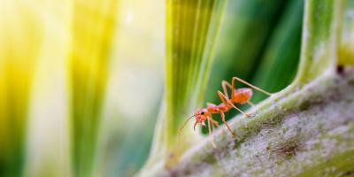 3 Ways to Get Rid of Household Ants, Lexington-Fayette, Kentucky