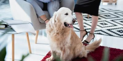 5 Carpet Cleaning Tips for Your Pet-Friendly Home, Ashtabula, Ohio