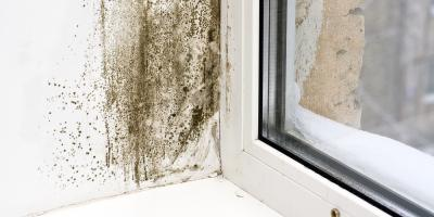 Mold Remediation Experts Highlight 3 Warning Signs of Mold, Kalispell, Montana