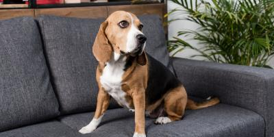 A Dog Owner's Guide to Kennel Cough , Stratford, Connecticut