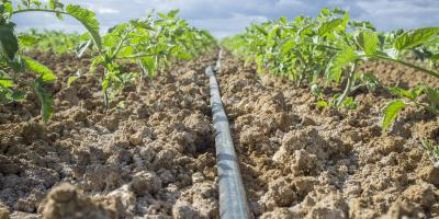 5 Top Advantages of Drip Irrigation, Waterford, Connecticut