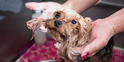 What Insurance Policies Do Businesses That Work With Animals Need?, Stafford, Texas