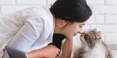 5 Ways Pet Owners Can Keep Their Heating & Cooling System in Good Shape, 4, Tennessee