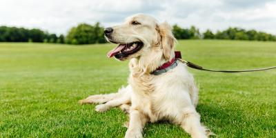 Guide to Lawn Fertilization for Pet Owners, Enterprise, Alabama