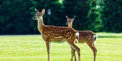 A Brief Guide to Deer Fencing, Hamptonburgh, New York