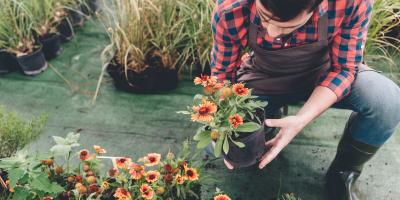 Why You Should Plant a Garden on Your Commercial Roof, Onalaska, Wisconsin