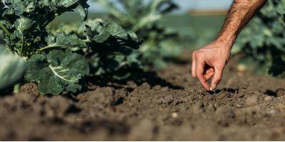 What Are the Benefits of Organic Soil?, Henrietta, New York