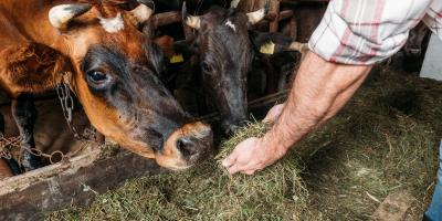 Understanding the Different Types of Cow Feed, Adams, Wisconsin