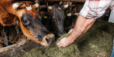 A Guide to Feed Bunk Management, West Plains, Missouri