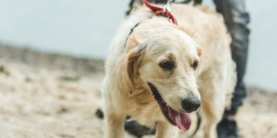4 Essential Tips for Senior Pet Care, Buckeye Lake, Ohio