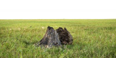 3 Reasons to Consider Stump Grinding, Moody, Alabama