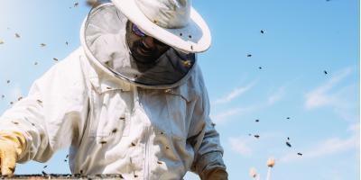 3 Tips for Preventing Bee Infestation, Ogden, New York