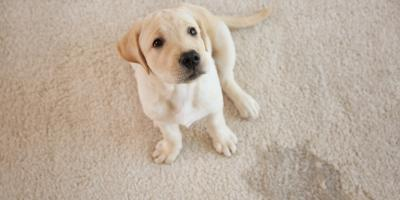 4 Tips to Protect Carpet From Pets, Barnesville, Ohio