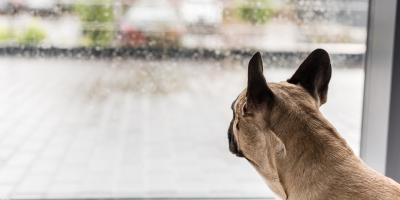3 Tips for Cleaning Windows Your Pets Have Smudged, Columbus, Ohio