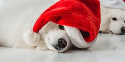 A Guide to Animal Wellness & Safety for the Holiday Season, Ewa, Hawaii