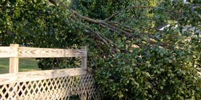 3 Reasons Tree Service Is Crucial After a Storm, Newburgh, New York