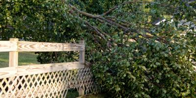 How Is Emergency Tree Service Different Than 'Normal' Service?, Macedon, New York