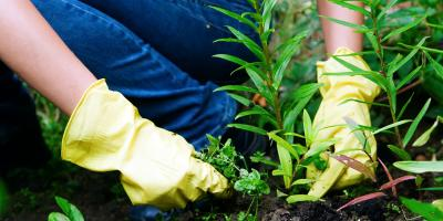 What Weeds May Be Lurking on Your New Mexico Property?, North Hobbs, New Mexico