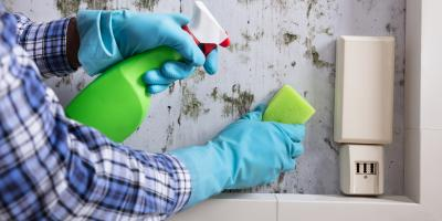 4 Reasons Why You Shouldn't Remove Mold Yourself, St. Augustine, Florida