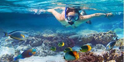 3 Types of Marine Life You Might See While Snorkeling in Hawaii, Koolaupoko, Hawaii