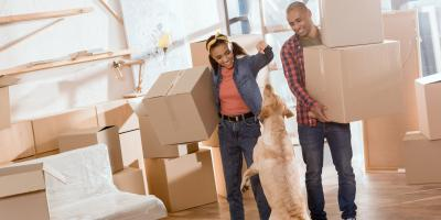 4 Do's & Don'ts for Moving With a Dog, Puyallup, Washington