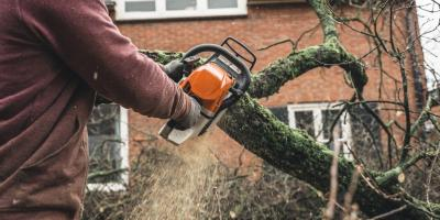 How to Tell if Your Landscaping Needs Tree or Shrub Removal, Medary, Wisconsin