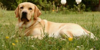4 Common Dog Allergies, Sanford, North Carolina