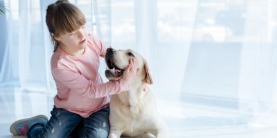 3 Tips for Senior Animal Care, Prairie du Chien, Wisconsin