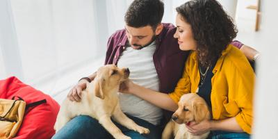 3 Tips When Adding a Second Dog to the Family, Montgomery, New York