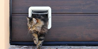 3 Garage Door Safety Tips for Pet Owners , 4, Tennessee