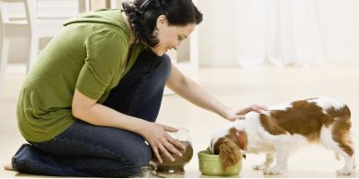 What to Do When Your Pet Is in Pain, Amsterdam, Virginia