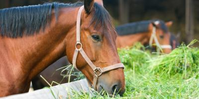 5 Types of Horse Feed & Their Benefits, Bethel, Ohio