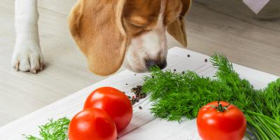 5 Fruits & Vegetables That Are Safe for Dogs to Eat, Manhattan, New York