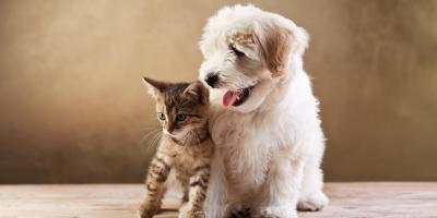 Free Exam for Second Pet, Sanford, North Carolina